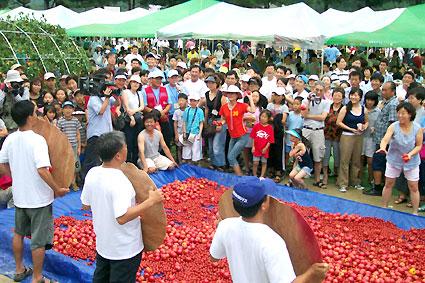 제1회 화악산 고랭지 찰토마토 축제가 2일 화천 광덕초교에서 열려 관심을 끌었다. 참가자들이 토마토 던지기를 하며 즐거워 하고 있다.   화천/김용식