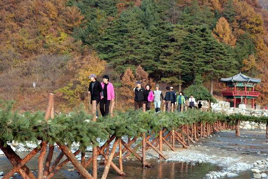 주말을 맞아 아우라지를 찾은 관광객들이 국내 최장 섶다리를 건너고 있다.