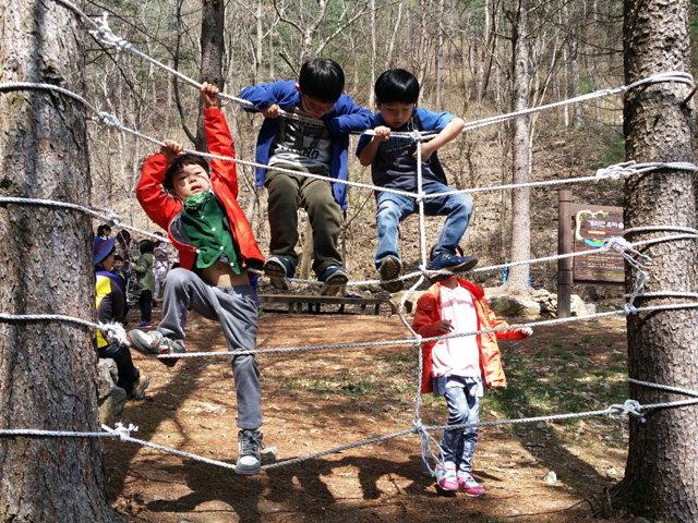 ▲ 영월국유림관리소의 태화산 유아숲체험원에서 유아들이 거미줄놀이를 즐기고 있다.