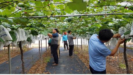▲ 영월군농업기술센터와 농약 제조 C회사 관계자들이 지난달 30일 피해 상황을 확인하고 있다.