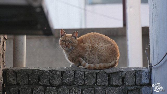 ▲ 나는 고양이로소이다