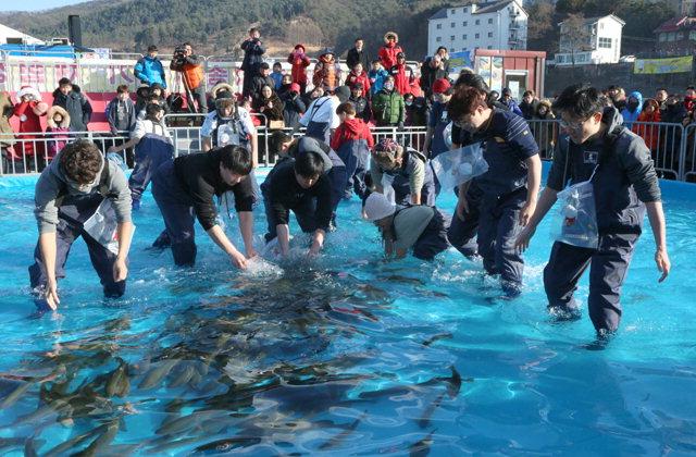▲ 홍천강 인삼송어축제에 참가한 방문객들이 맨손송어잡기를 하며 즐거워 하고 있다.