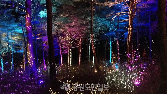 ▲ 가이드와 떠나는 겨울 숲