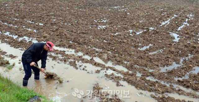 ▲ 도내전역에 단비가 내린 23일 춘천 동면 발산리에서 농민이 모내기를 앞두고 논에 물을 대고 있다.  김명준
