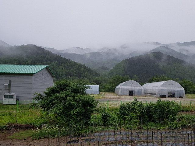 ▲ 산림청은 2019년 완공을 목표로 고성군에 3㏊규모의 대북 지원용 양묘장을 조성하고 있다.사진은 고성육묘장 전경.