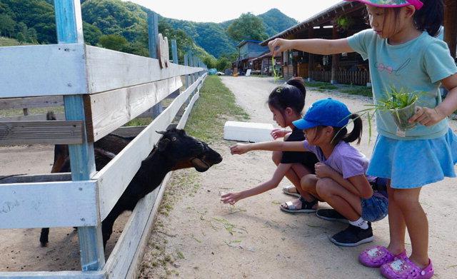▲ 2013년 체험목장으로 전환한 해피초원목장에서 어린이들이 양과 염소에게 먹이를 주고있다.