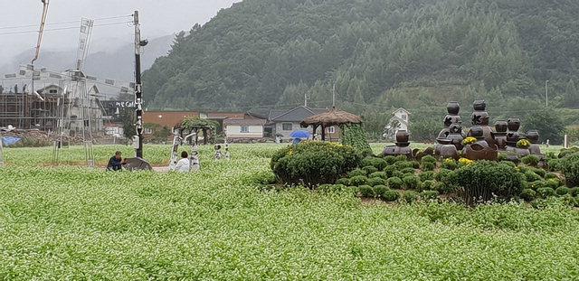 ▲ 메밀꽃밭 포토존