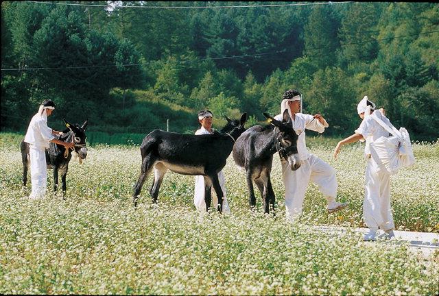 ▲ 올해 평창효석문화제가 '인연,사랑 그리고 추억'을 주제로 내달 1일 개막한다.