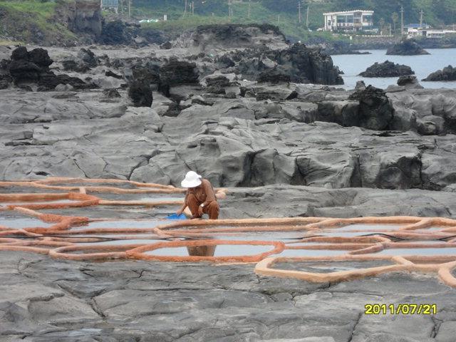 ▲ '소금빌레'로 불리는 전국 유일 천연 돌염전에서 소금을 생산하는 모습.