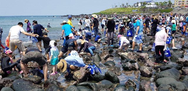 ▲ 지난 5월에 처음으로 열린 구엄마을 소라잡기 축제에 4000여명이 참여했다.