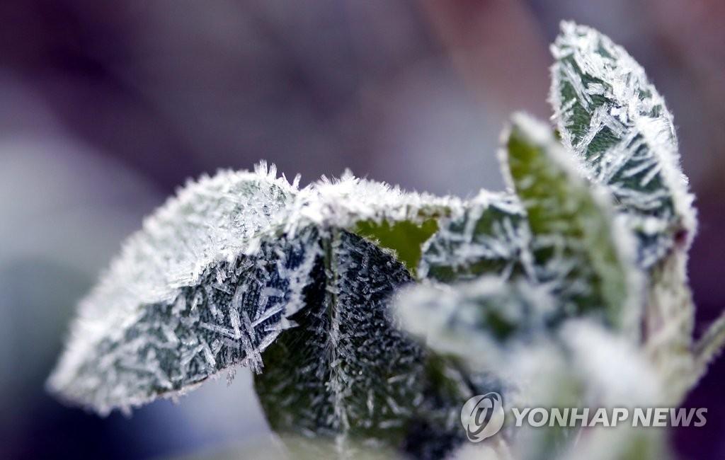 ▲ 서리에 얼어붙은 늦가을