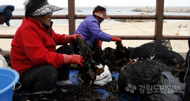 ▲ 봄날씨가 이어진,12일 강릉시 연곡면 영진리 해변 앞에서 어업인들이 채취한 미역을 정리하고 있다.  구정민