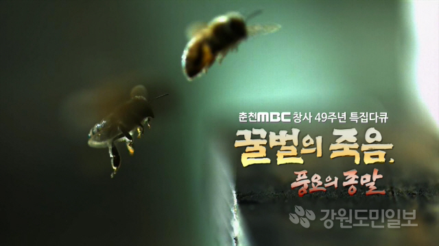▲ 춘천MBC가 2017년 제작한 다큐멘터리 '꿀벌의 죽음,풍요의 종말'