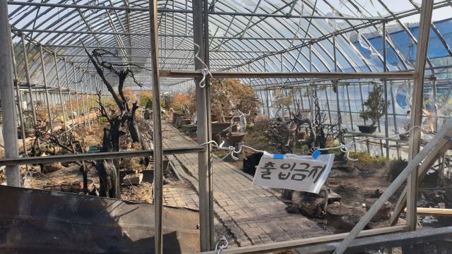 ▲ 산불로 폐허가 된 속초 노학동 분재하우스에서 최근 일부 분재가 도난 당했다.