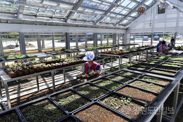 ▲ 정선군 고한읍행정복지센터 일원에 조성된 함백산 야생화 마을공방에서는 120여 종의 야생화를 재배 중이다.