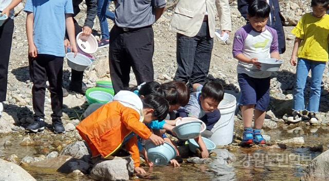 ▲  인제군은 20일 용대리 북천에서 내수면 생태계 복원사업으로 한반도 토종 민물고기인 미유기(깔딱메기) 치어 3만 마리를 방류했다.