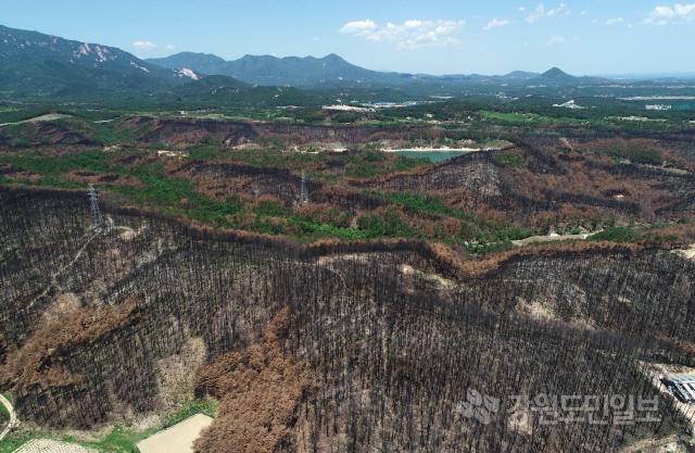 ▲ 신록이 짙어가는 계절이지만 지난달 대형산불이 발생했던 고성의 산림은 화마의 상처로 가득하다. 21일 고성군 일대에 고스란히 남겨진 산불의 흔적이 복원이라는 숙제를 던져주고 있다.    최유진
