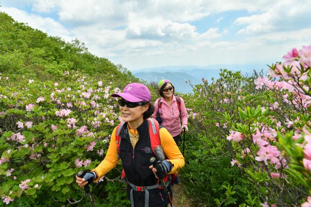 ▲ 정선 두위봉은 개성만점의 4개 등산로를 관광객에게 선사한다.