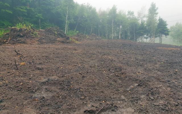 ▲ 8일 평창 대관령면 횡계리 산림청 소유 임야에 나무들이 벌목된 뒤 개발행위가 이뤄지고 있다.  윤왕근
