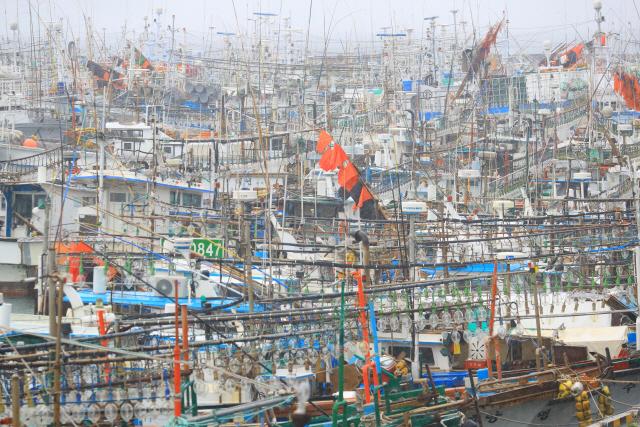 ▲ 제5호 태풍 '다나스'가 북상 중인 19일 오후 제주시 한림읍 한림항에 어선들이 대피해 있다. 2019.7.19
