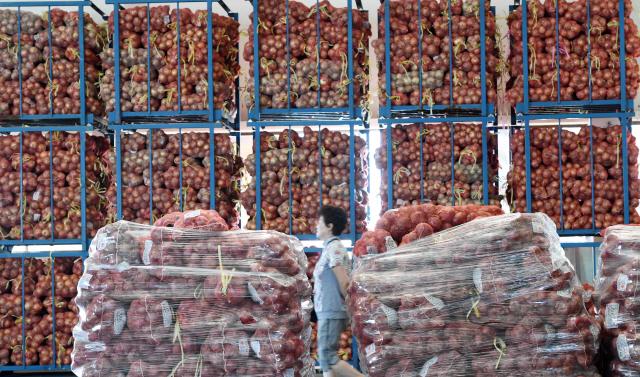 ▲ 양파의 가격 폭락속에 생산량이 159만 4450톤으로 통계 집계를 시작한 1980년 이후 최대치를 기록한 것으로 나타났다.19일 춘천시농수산물도매시장에 양파가 수북히 쌓여있다.   최유진