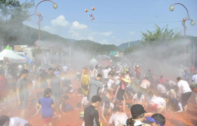 ▲ 화천 토마토축제 메인 이벤트인 '황금반지를 찾아라!'