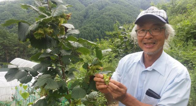 ▲ 박찬우 홍천군헤이즐넛 연구회장이 헤이즐넛나무에서 딴 열매를 보여주고 있다.