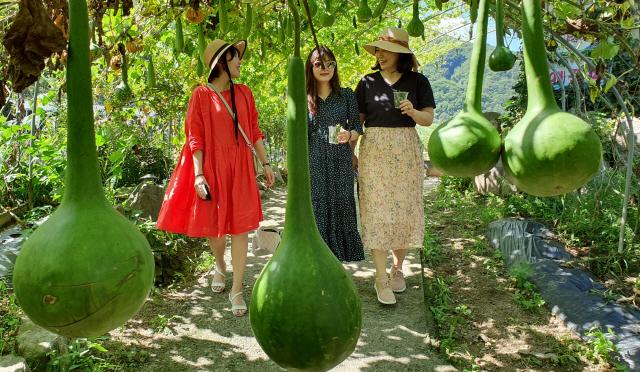 ▲ 도 전역이 화창한 날씨를 보인 30일 춘천의 한 관광지를 찾은 관광객들이 조롱박 터널을 걸으며 이른 가을을 만끽하고 있다.  서영