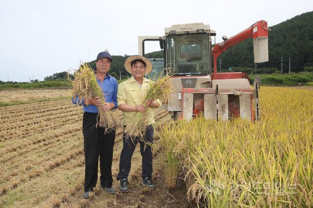 ▲ 동해시 수평선 햅쌀생산단지의 올해 첫 벼베기가 2일 현장에서 심규언 시장 등이 참여한 가운데 진행됐다.이날 수확된 쌀은 추석 제수용,선물용으로 판매될 예정이다.