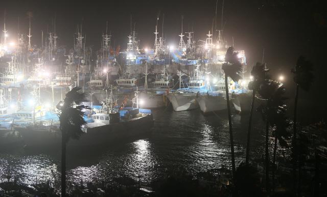 ▲ 제13호 태풍 '링링'의 영향으로 태풍경보가 내려진 6일 오후 제주 서귀포항에 강풍이 몰아쳐 야자수가 심하게 흔들리고 있다. 2019.9.6