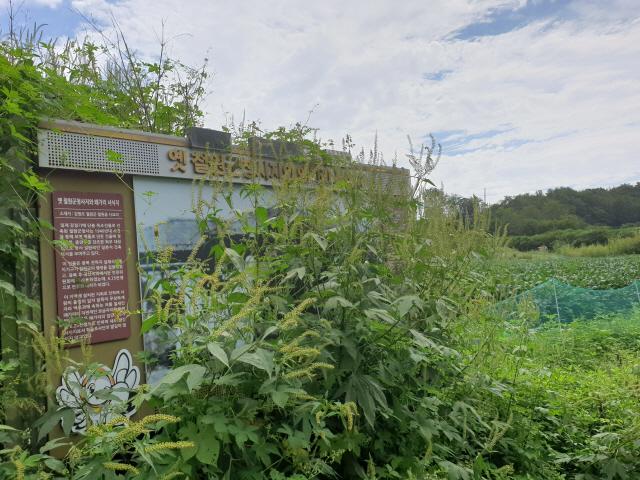 ▲ 옛 철원군청사터를 안내하는 표지판이 잡초에 가려져 형체를 알아볼 수 없다.
