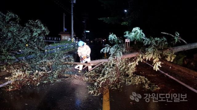 ▲ 지난 22일 오후 11시 4분쯤 제17호 태풍 '타파'의 영향으로 인제군 기린면 현리의 한 도로에 나무가 쓰러져 차량통행을 방해하고 있다.강원도소방본부 제공
