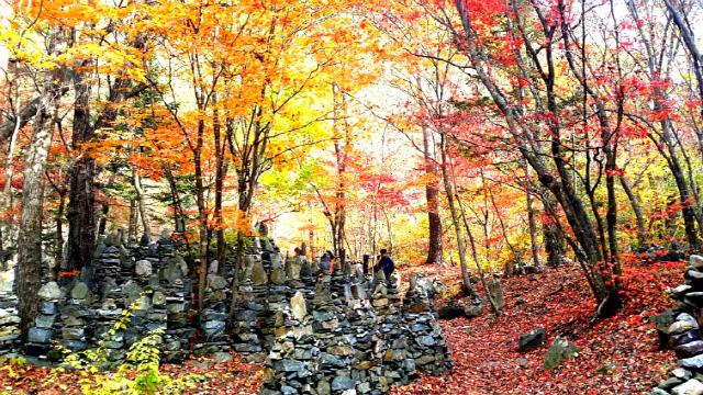 ▲ 강릉시 왕산면 대기리 '모정탑길은 불가사의한 3000개 돌탑과 함께 가을 단풍으로 특히 유명하다.