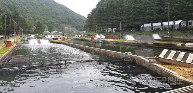 ▲ 내에서 처음으로 평창 원복수산의 송어양식기술이 민간차원에서 네팔에 전수된다.원복수산 함준식 대표와 전경.신현태