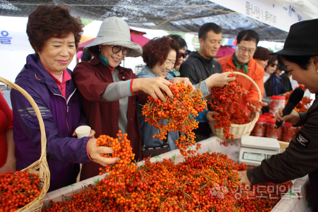 ▲ 백담마가목축제가 5일과 6일 용대관광지 일원에서 열렸다.축제장을 방문객들이 마가목을 구경하고 있다.