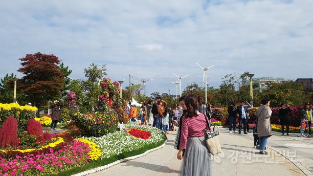 ▲ 지난 3일부터 청초호 공원에서 진행중인 속초 국화전