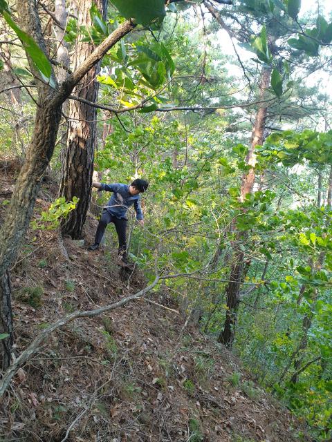▲ 21일 기자가 찾은 인제 기린면 한 야산의 버섯 서식지는 주변 나뭇가지,수풀을 잡지 않고는 이동이 어려울 정도로 경사가 가파르고 험했다.