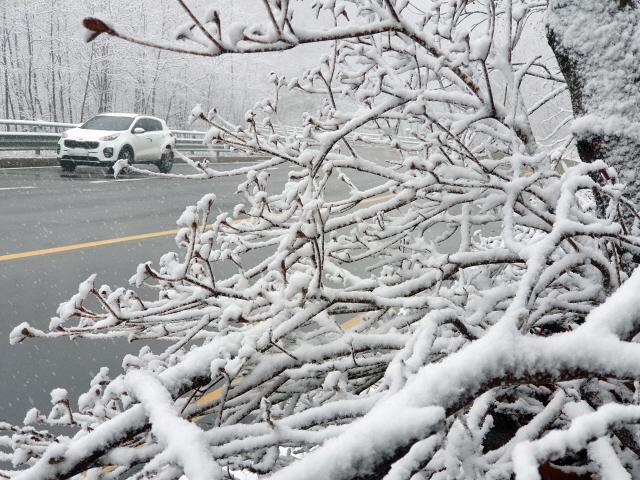 ▲ 강원 산간에 눈이 내린 25일 한계령에 한겨울 풍경이 연출되고 있다.     2019.11.25