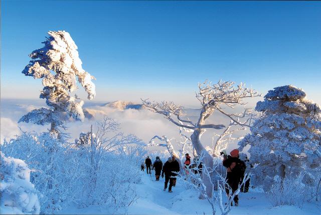 ▲ 겨울 태백산을 오르는 등산객들.  사진제공=태백시