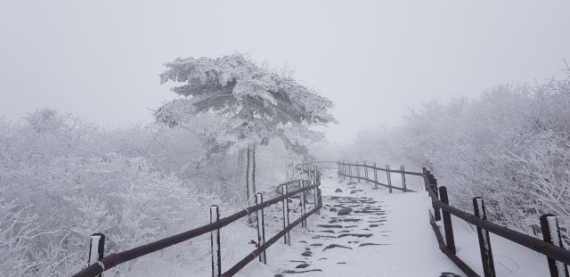해발 1567m의 태백산은 눈부신 설경을 자랑한다