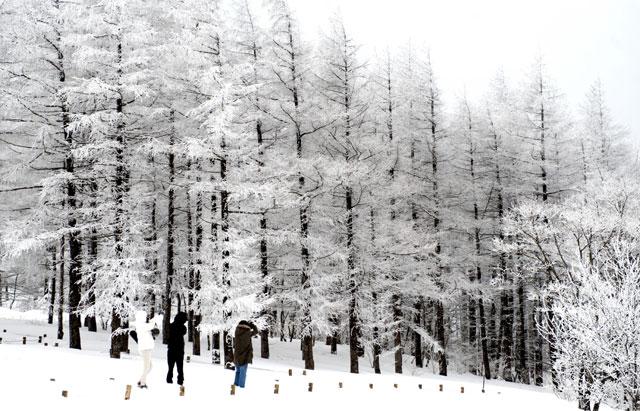 ▲ 함백산 만항재 정상 부근의 주목 군락지 상고대는 겨울 트레킹족들에게 잊을 수 없는 절경을 선사한다