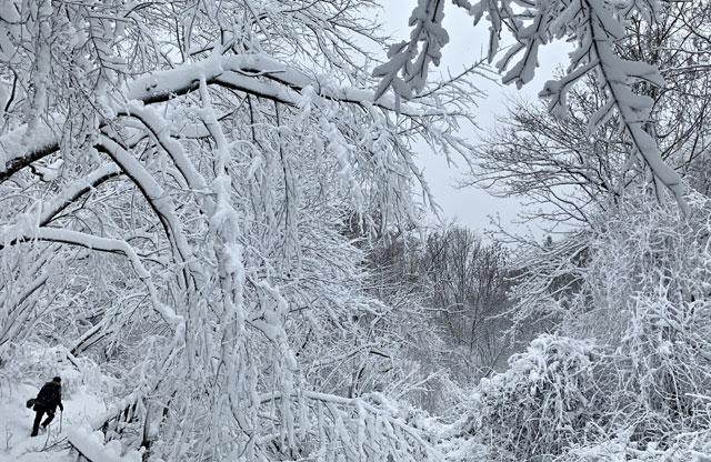 ▲ 함박눈 내린 28일 태백산국립공원 탐방로 일대가 은빛 겨울왕국으로 변해있다. 2020.1.28 [태백산국립공원사무소 제공.재판매 및 DB 금지]