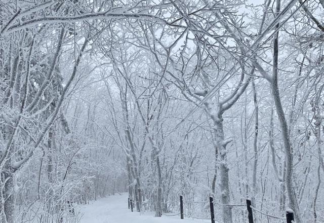 ▲ 함박눈이내린 28일 태백산국립공원 탐방로가 은빛 겨울왕국으로 변해있다. 2020.1.28 [태백산국립공원사무소 제공.재판매 및 DB 금지]