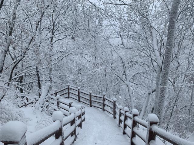 ▲ 28일 태백지역에 눈이 내리면서 태백산이 설경으로 장관을 이루고 있다.