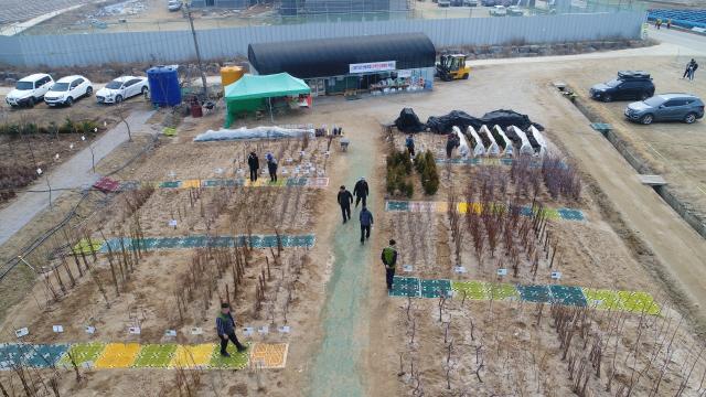 ▲ 화천군산림조합 직원들이 14일부터 48일 동안 운영될 하남면 위라리 나무전시판매장 준비에 한창이다.
