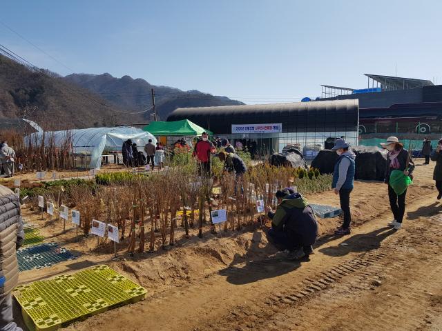 ▲ 화천나무시장 개장 첫주부터 주민들의 발길이 이어지고 있다.