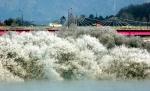 호수변 얼음꽃 장관