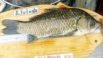 민통선 토종 물고기 '신음'