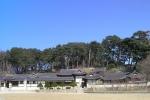 [숲에 on] 2. 한국 최고 전통가옥 선교장과 소나무 숲