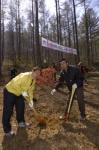 태백국유림관리소 나무심기 행사